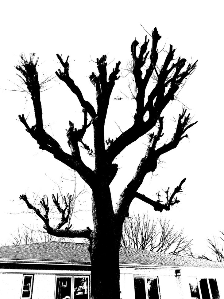 tree_IMG_4649